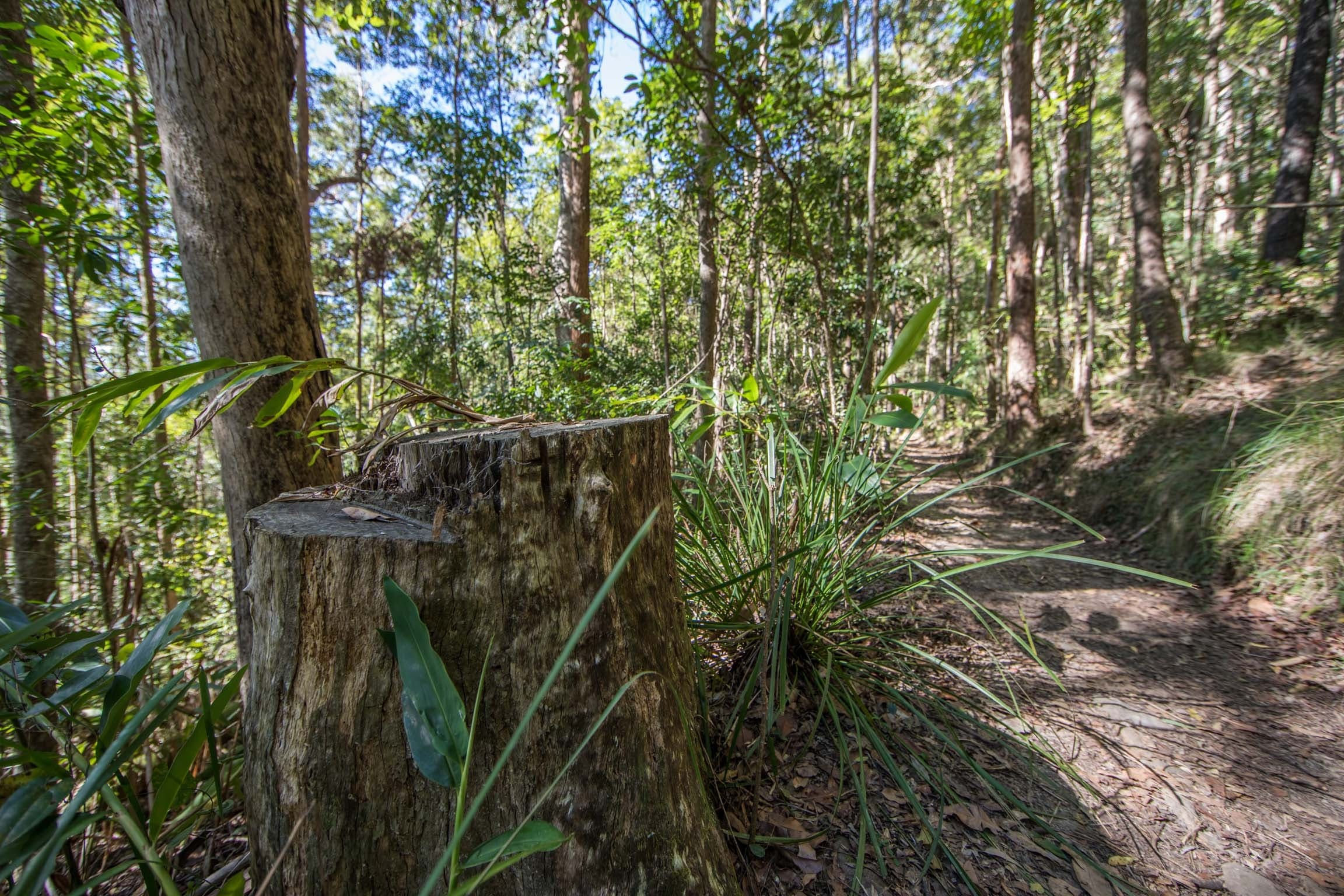 Thylogale Track - New South Wales Tourism