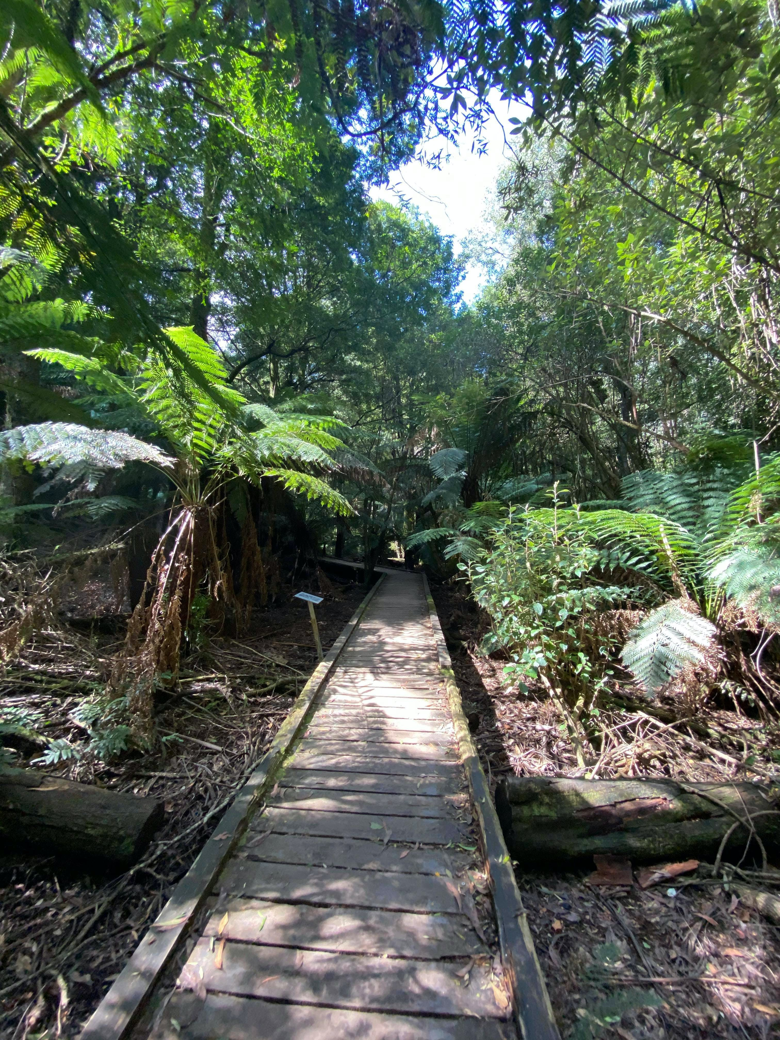 Wirrawilla Rainforest Walk - New South Wales Tourism