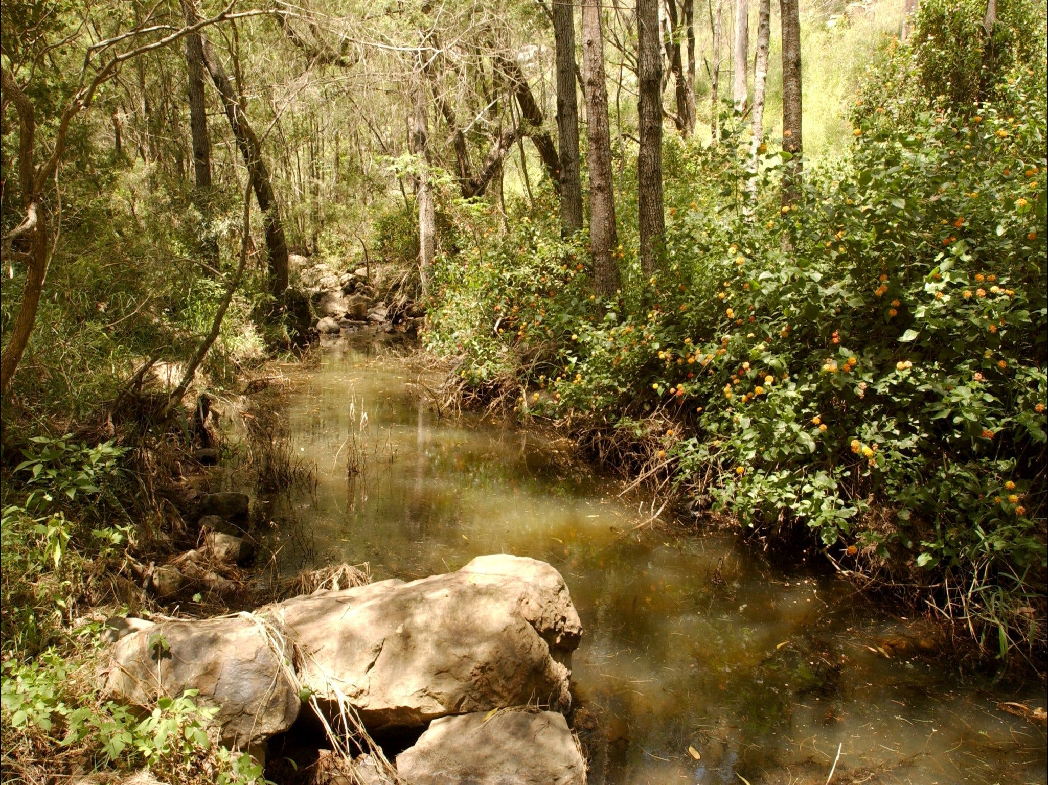 Sandy Creek Track - New South Wales Tourism