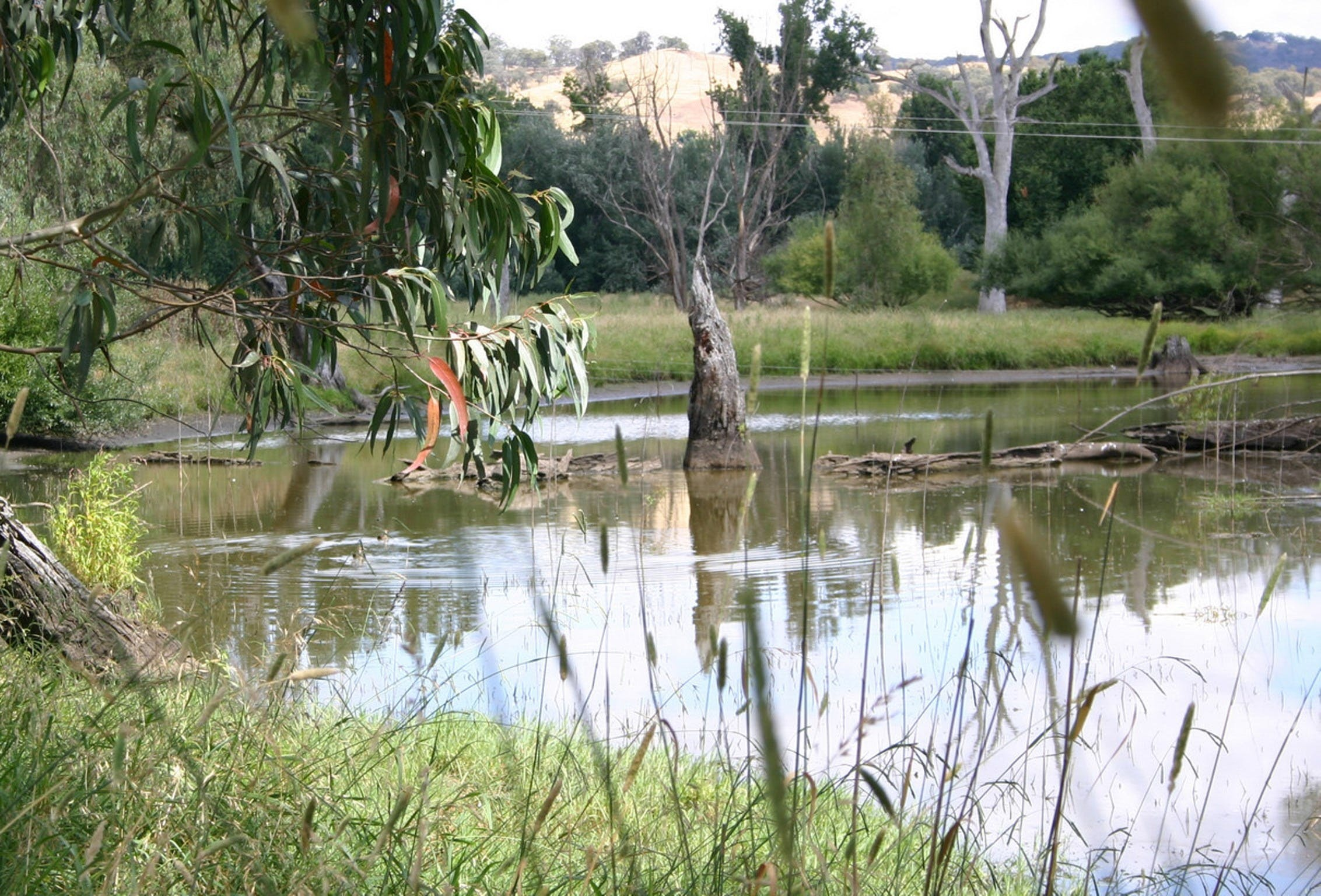 Tumut Wetlands - New South Wales Tourism