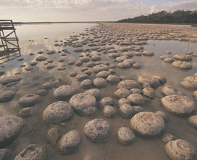 Lake Clifton Thrombolites - New South Wales Tourism