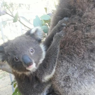 West Oz Wildlife Petting Zoos - New South Wales Tourism