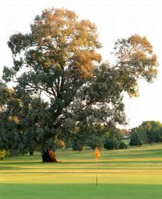 Cowra Golf Club - New South Wales Tourism