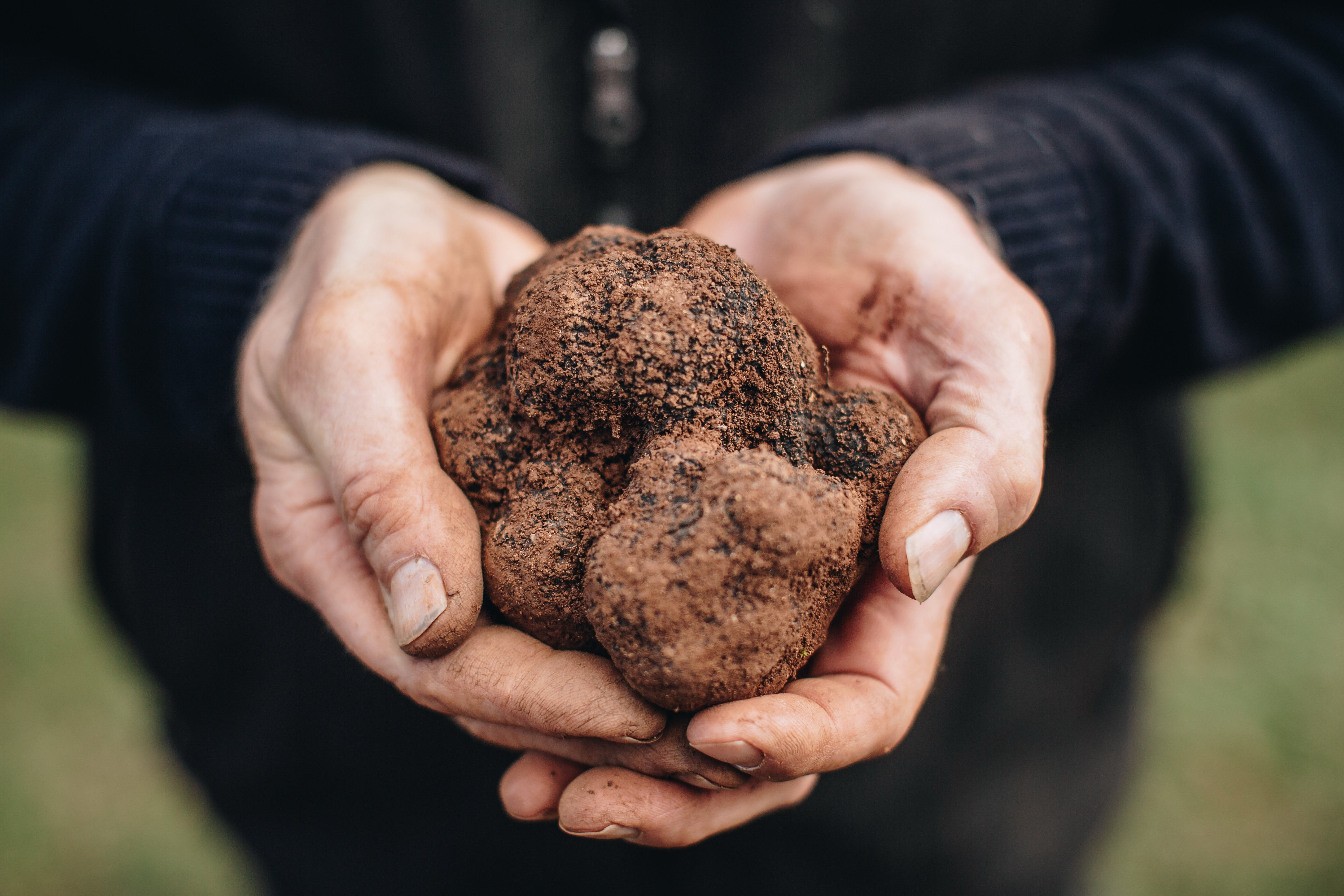 A Taste of Truffles - New South Wales Tourism