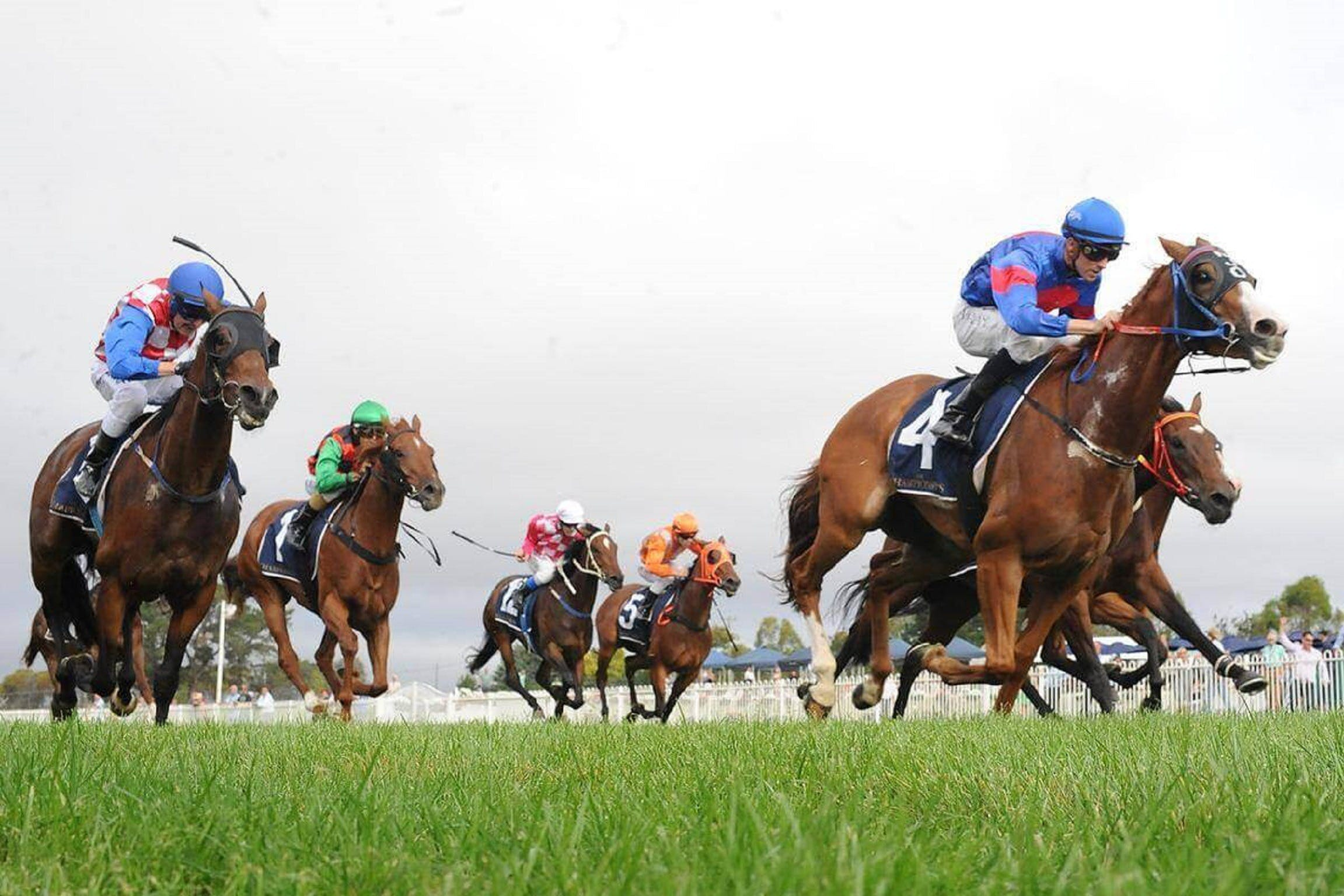 Christmas Cup Race Day - New South Wales Tourism