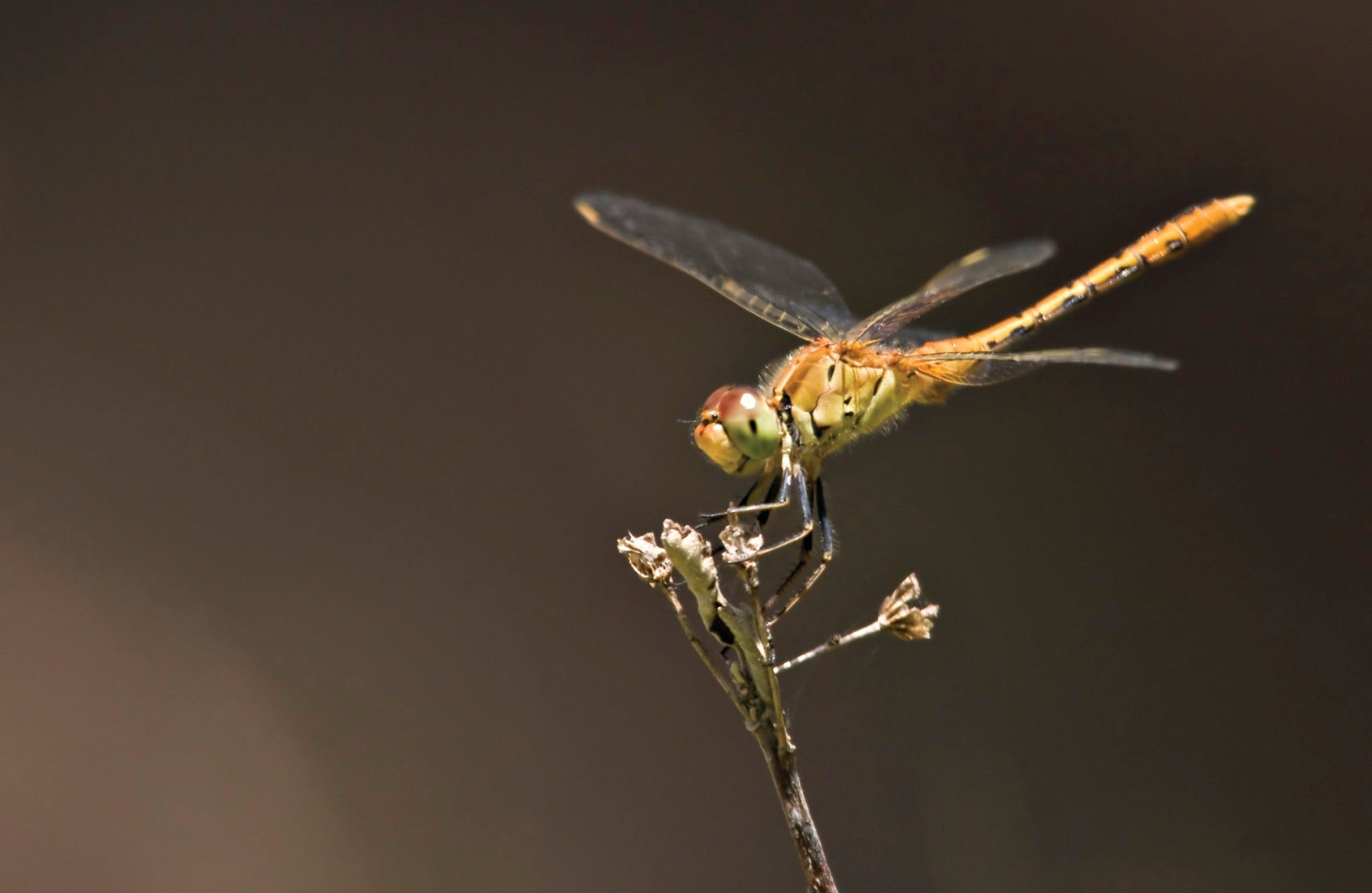 Dragonfly Discovery - New South Wales Tourism