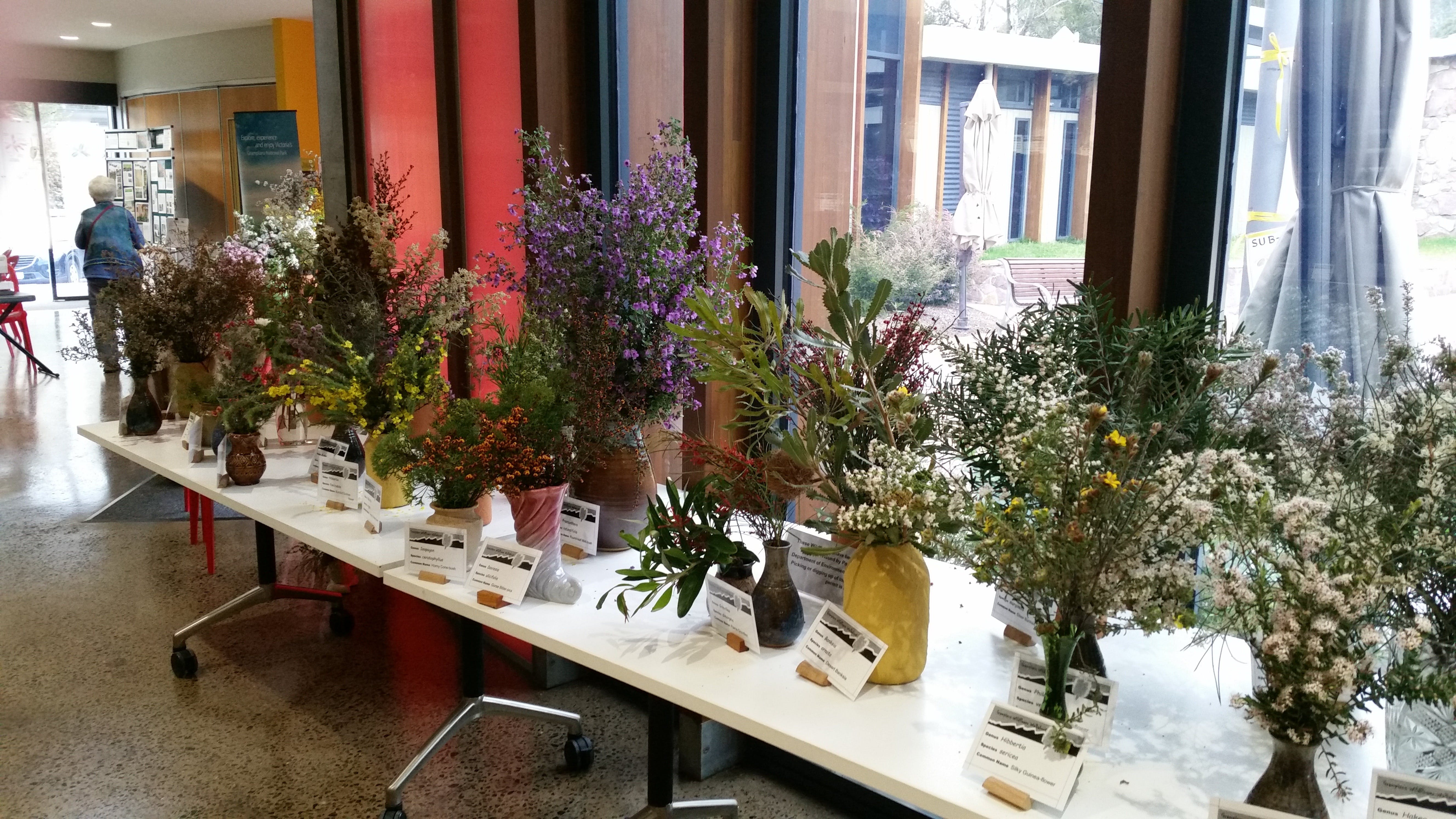 Grampians Wildflower Show - New South Wales Tourism