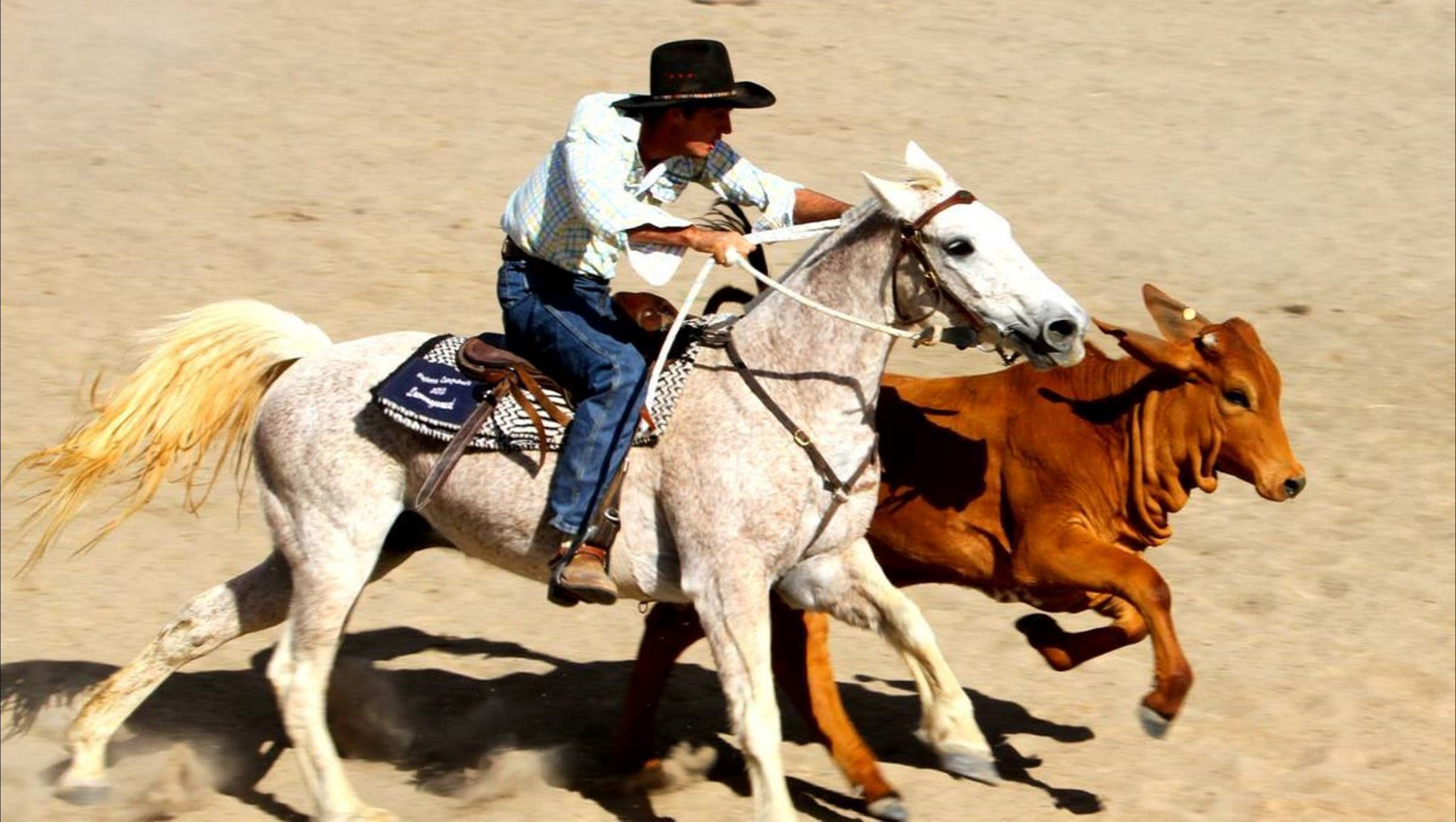 Bedourie Campdraft Rodeo Gymkhana - New South Wales Tourism