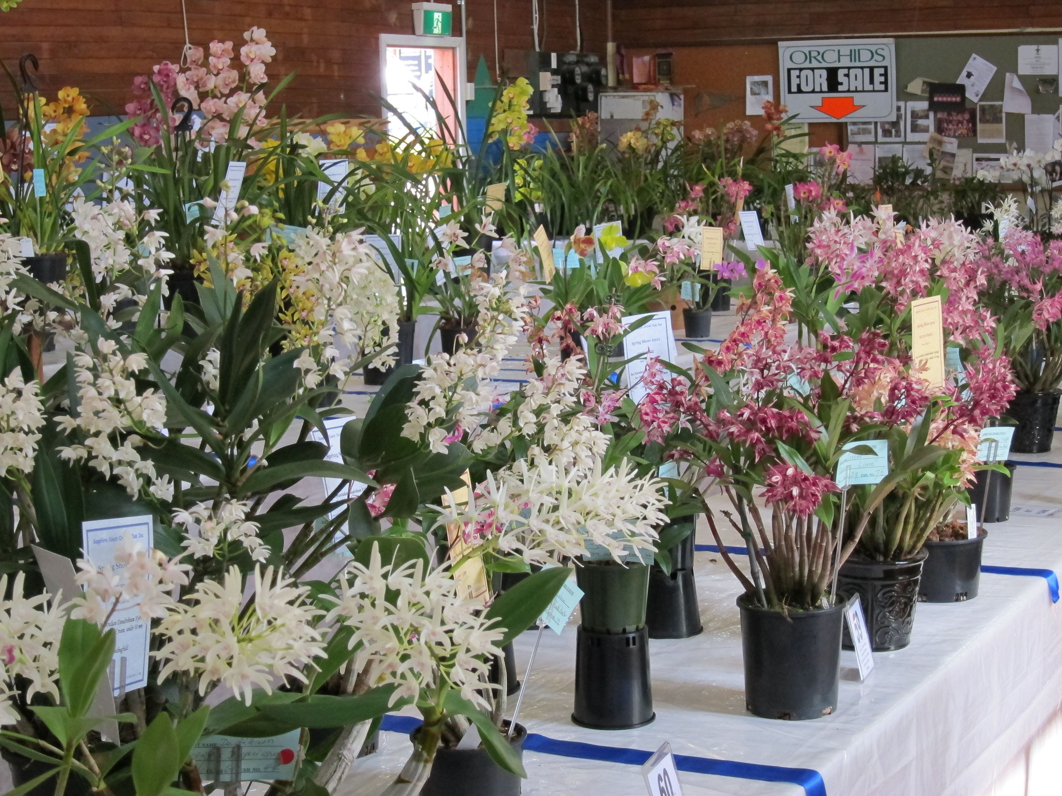 Sapphire Coast Orchid Club Spring Orchid Show - New South Wales Tourism