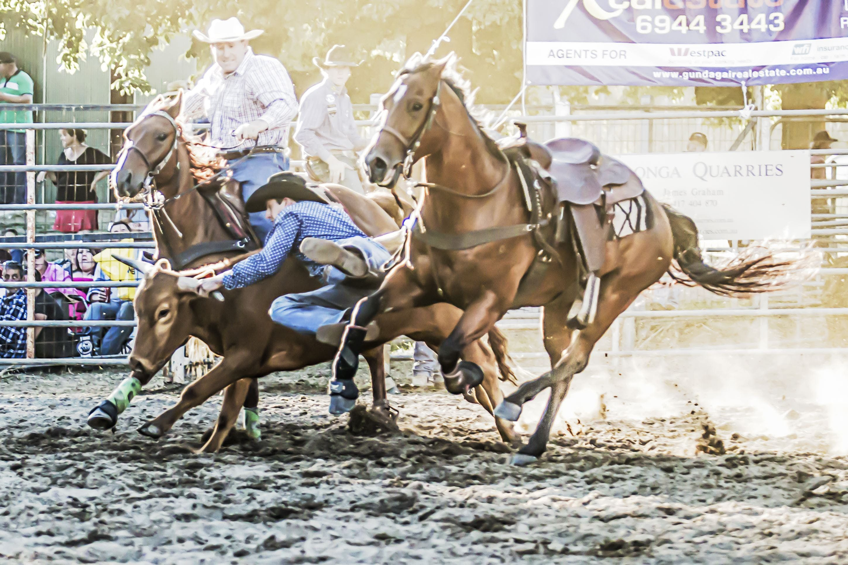 Gundagai Rodeo - New South Wales Tourism