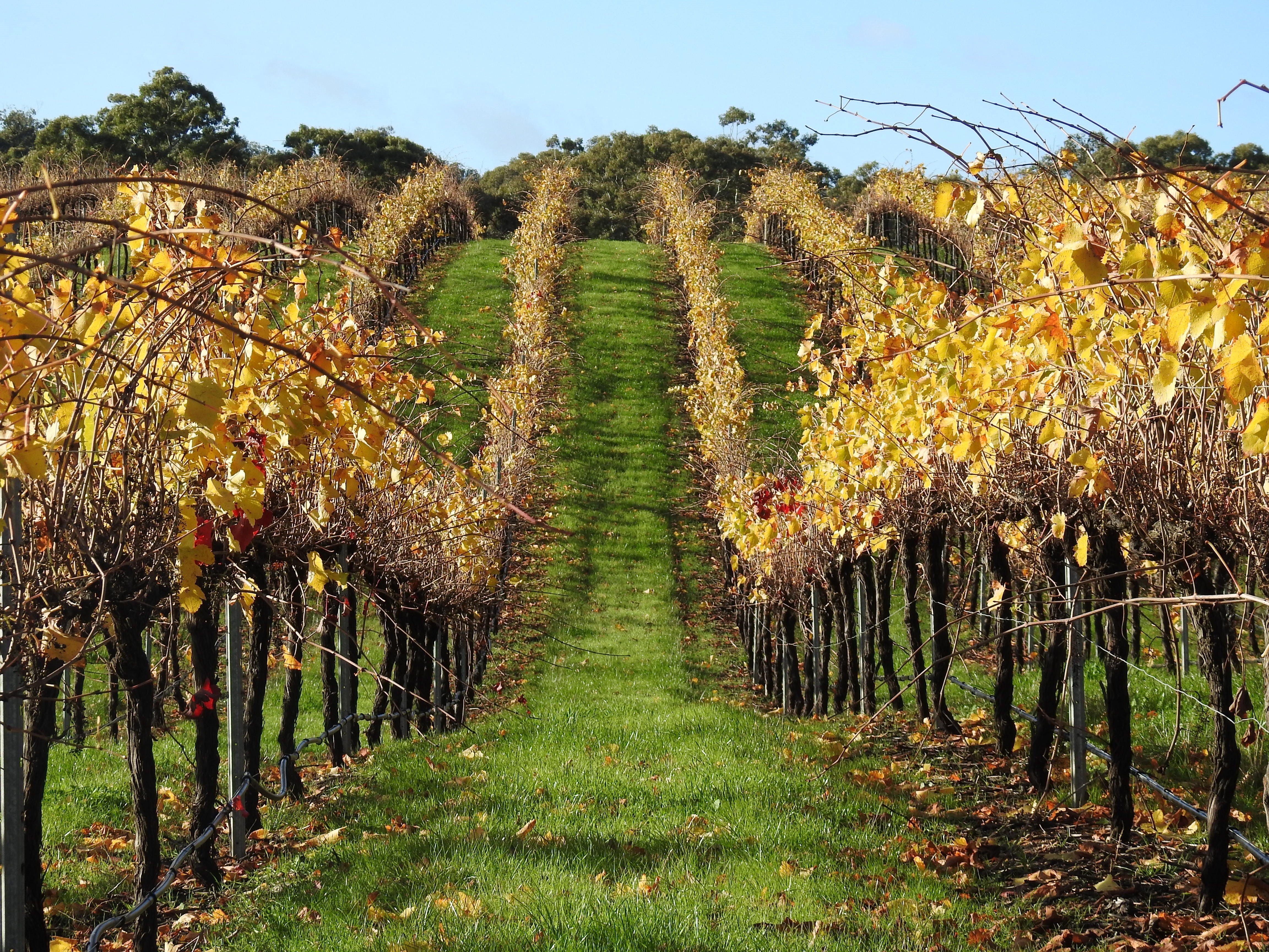 Miners Ridge Wine Tasting - New South Wales Tourism