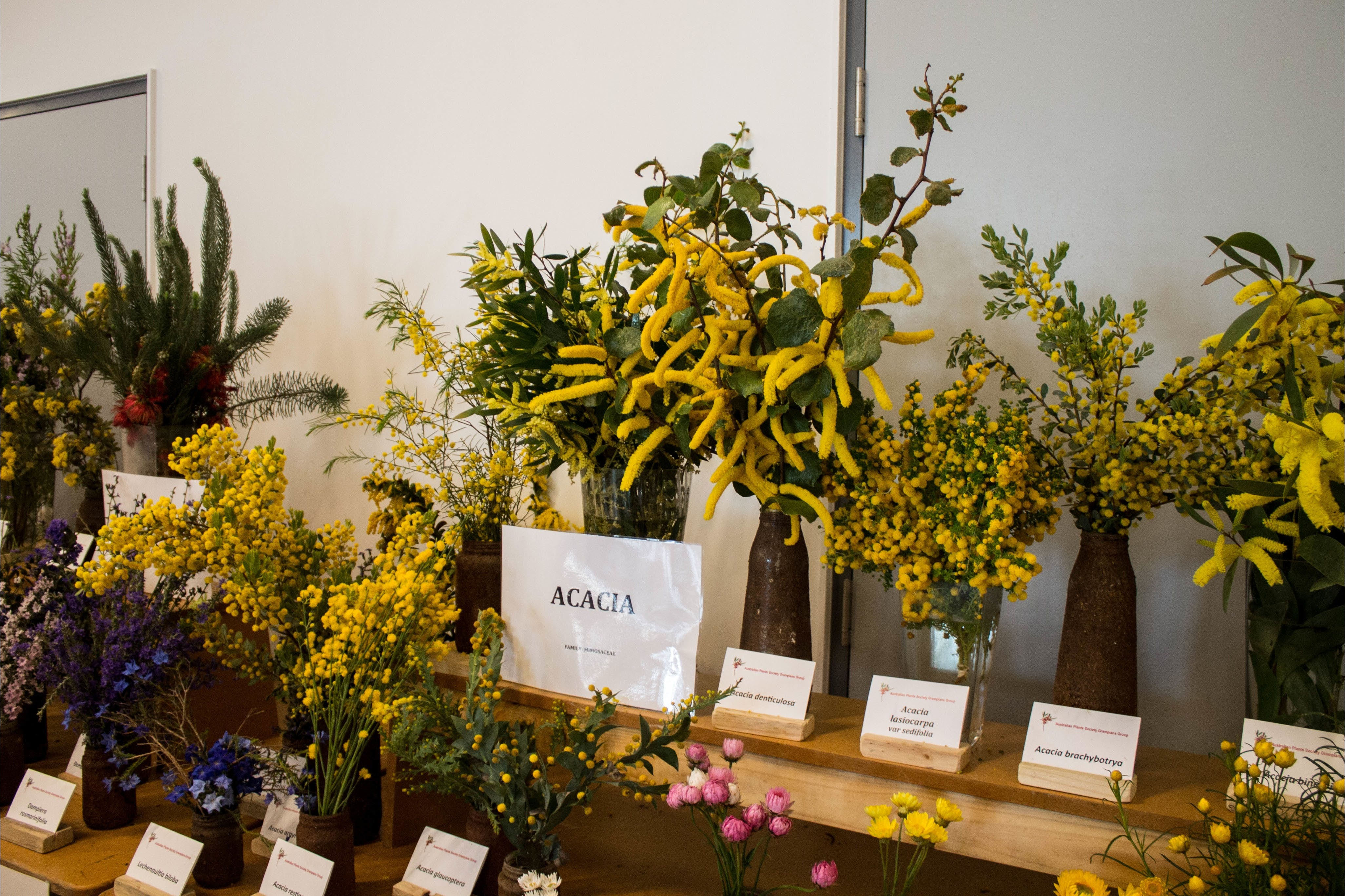 Pomonal Native Flower Show - New South Wales Tourism