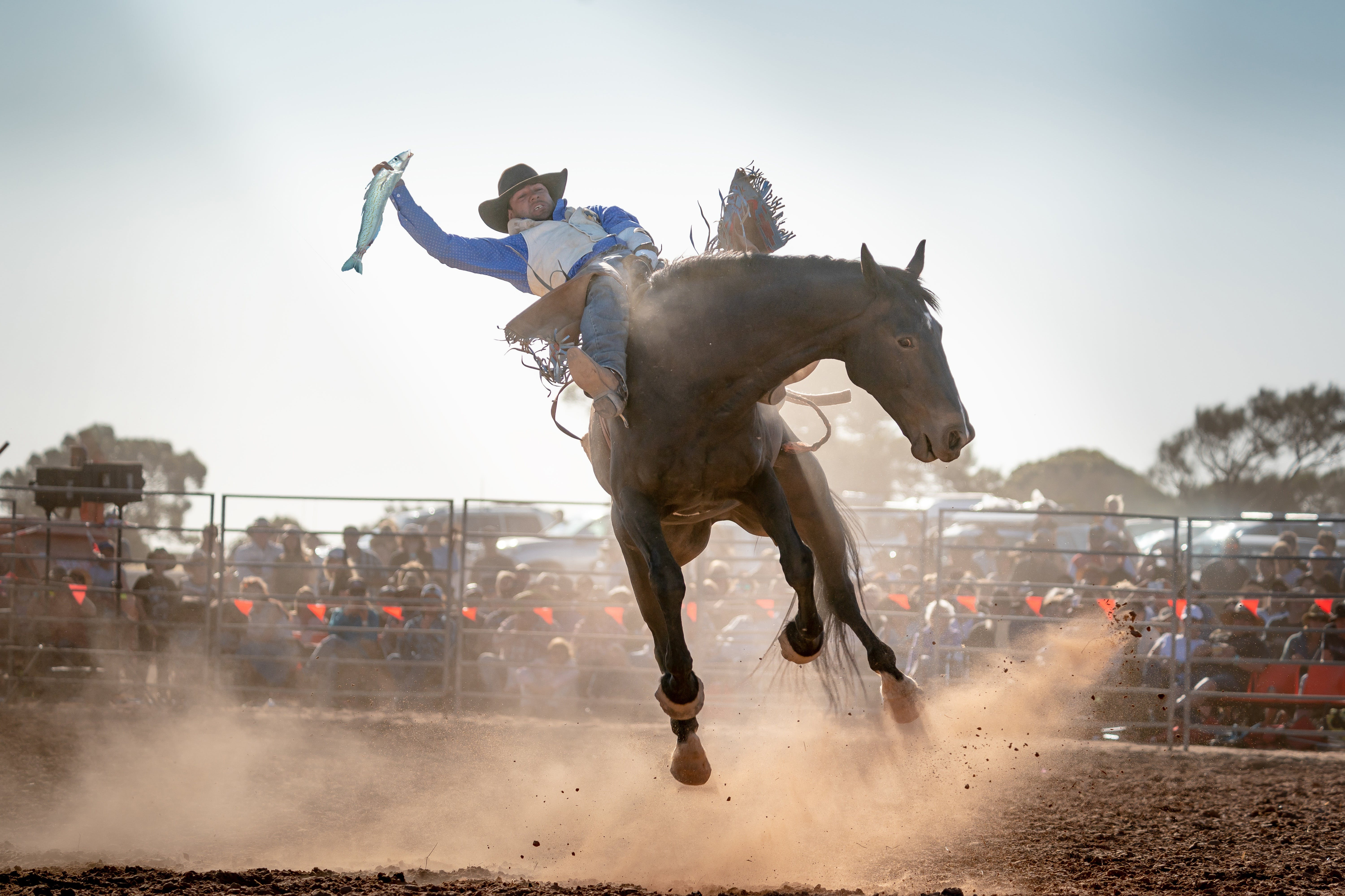 Rodeo by the Sea - Streaky Bay - New South Wales Tourism