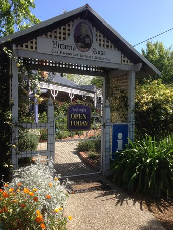 Victoria Rose Tea Rooms - New South Wales Tourism