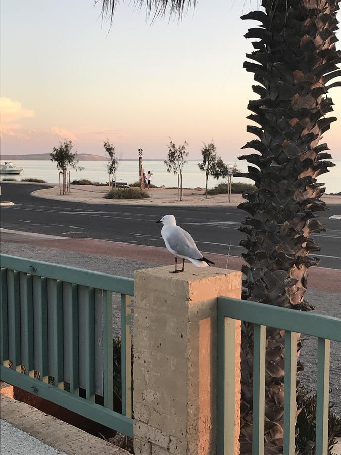 Shark Bay Seafront Apartments - New South Wales Tourism